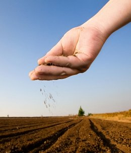260px-Planting_seeds